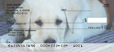 Click on Yellow Lab Puppies  Personal Checks For More Details