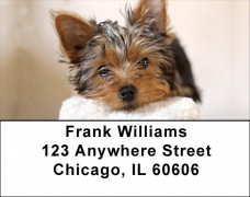 Click on Yorkies Address Labels For More Details