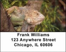 Click on Iguana Be Cool Address Labels For More Details