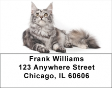 Click on Maine Coon Cats Address Labels - Cat Labels For More Details