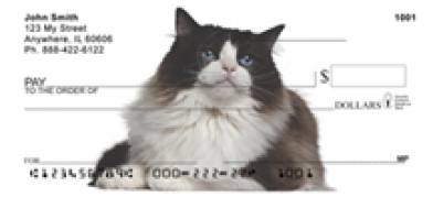 Click on Ragdoll - Ragdoll Cat  Personal Checks For More Details
