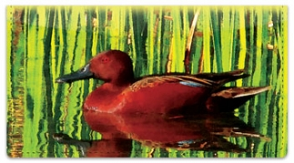 Click on Bulone Bird Checkbook Cover For More Details