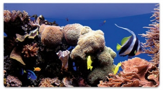 Click on Coral Reef Checkbook Cover For More Details