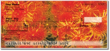 Click on Coral Reef Personal Checks For More Details