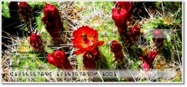 Click on Cactus Checks For More Details