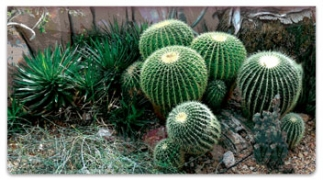 Click on Cactus Garden Checkbook Cover For More Details