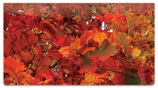 Click on Autumn Brilliance Checkbook Cover For More Details