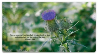 Click on Scripture & Nature Checkbook Cover For More Details