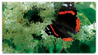 Click on Red Admiral Butterfly Checkbook Cover For More Details