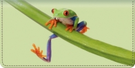 Click on Froggy Fun Checkbook Cover For More Details