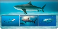 Click on Sharks Checkbook Cover For More Details