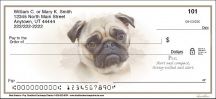 Click on Best Breeds - Pug Personal Checks For More Details