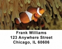 Click on Tropical Fish Address Labels For More Details