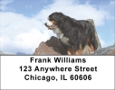 Click on Bernese Mountain Dogs Address Labels For More Details