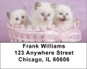 Click on Ragdoll Kittens Address Labels For More Details