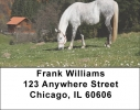 Click on Grazing Freedom Address Labels  For More Details