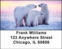 Click on Polar Bears Address Labels For More Details