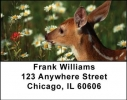 Click on Baby Deer Address Labels For More Details