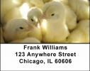 Click on Barnyard Babies Address Labels For More Details