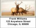 Click on American Wildlife Address Labels For More Details