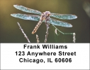 Click on Dragonflies Address Labels - Dragonfly Labels For More Details