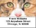 Click on Calico Cats Address Labels - Cat Labels For More Details