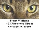 Click on Abyssinian Cats Address Labels - Cat Labels For More Details