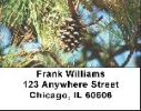Click on Pine Cone Labels - Pine Cones Address Labels For More Details