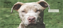 Click on Pit Bull - Pit Bull Friends  Personal Checks For More Details