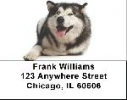 Click on Alaskan Malamute Address Labels - Malamute Labels For More Details