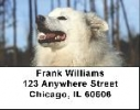 Click on American Eskimo Dog Address Labels For More Details