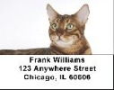 Click on Bengal Cats Labels - Bengals Cat Address Labels For More Details