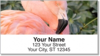 Click on Pink Flamingo Address Labels For More Details