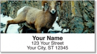 Click on Big Horn Sheep Address Labels For More Details
