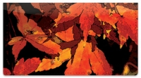 Click on Fall Leaves Checkbook Cover For More Details