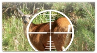 Click on Deer Hunting Checkbook Cover For More Details