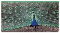 Click on Colorful Peacock Checkbook Cover For More Details