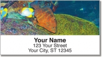 Click on Blue Dot Grouper Address Labels For More Details
