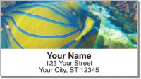 Click on Blue Ring Angelfish Address Labels For More Details