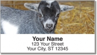 Click on Baby Goat Address Labels For More Details