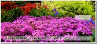 Click on Peaceful Garden Personal Checks For More Details