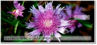 Click on Purple Flower Personal Checks For More Details