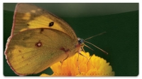 Click on Butterfly Garden Checkbook Cover For More Details
