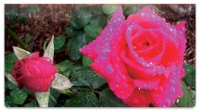 Click on Blooming Rose Checkbook Cover For More Details