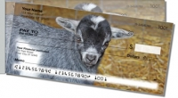 Click on Baby Goat For More Details