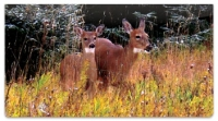 Click on Watercolor Deer Checkbook Cover For More Details