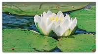 Click on Water Lily Checkbook Cover For More Details