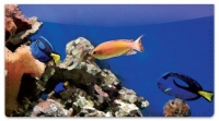 Click on Underwater World Checkbook Cover For More Details