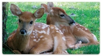 Click on Twin Baby Animal Checkbook Cover For More Details