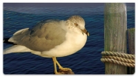 Click on Seagull Checkbook Cover For More Details